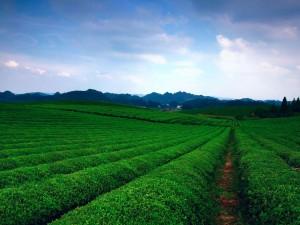 2020第十届广州健康保健食品及养生产品博览会